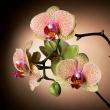Grid calendar Orchids 2018, 30 x 30 cm
