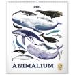 Nástěnný kalendář Animalium – Lucie Jenčíková 2021, 48 × 56 cm