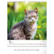 Nástěnný kalendář Kočky 2019, 30 x 34 cm