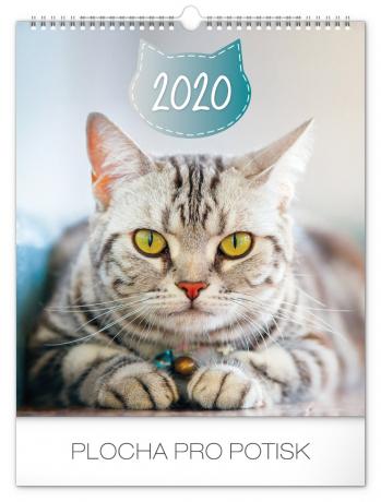 Nástěnný kalendář Kočky 2020, 30 × 34 cm