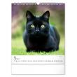 Nástěnný kalendář Kočky 2021, 30 × 34 cm