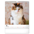Nástěnný kalendář Kočky 2022, 30 × 34 cm