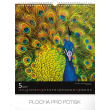 Nástěnný kalendář Ptáci 2019, 30 x 34 cm