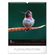 Nástěnný kalendář Ptáci 2020, 30 × 34 cm