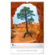 Wall calendar Trees 2020, 33 × 46 cm