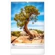Nástěnný kalendář Stromy 2022, 33 × 46 cm