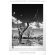 Nástěnný kalendář Woman – Adolf Zika 2019, 48 x 64 cm