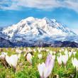 Poznámkový kalendář Alpy 2019, 30 x 30 cm