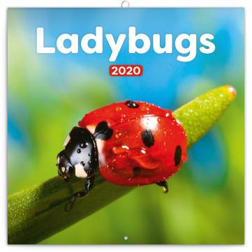 Poznámkový kalendář Berušky 2020, 30 × 30 cm
