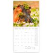 Poznámkový kalendář Divoká Afrika 2021, 30 × 30 cm