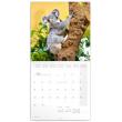 Poznámkový kalendář Koaly 2020, 30 × 30 cm
