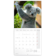 Poznámkový kalendář Koaly 2021, 30 × 30 cm