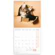 Poznámkový kalendář Kočky 2019, 30 x 30 cm
