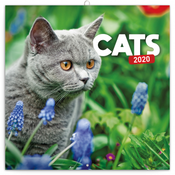 Poznámkový kalendář Kočky 2020, 30 × 30 cm