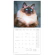 Poznámkový kalendář Kočky 2021, 30 × 30 cm