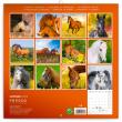 Poznámkový kalendář Koně 2019, 30 x 30 cm