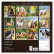 Poznámkový kalendář Koně 2020, 30 × 30 cm