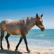 Poznámkový kalendář Koně a moře 2019, 30 x 30 cm