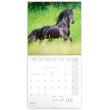 Poznámkový kalendář Koně – Christiane Slawik 2021, 30 × 30 cm