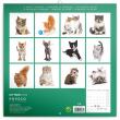 Poznámkový kalendář Koťata 2019, 30 x 30 cm
