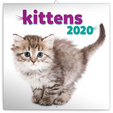 Poznámkový kalendář Koťata 2020, 30 × 30 cm