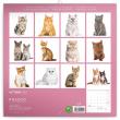 Poznámkový kalendář Koťata 2022, 30 × 30 cm