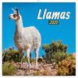 Poznámkový kalendář Lamy 2020, 30 × 30 cm