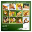 Poznámkový kalendář Liščí rodinka 2019, 30 x 30 cm