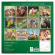 Poznámkový kalendář Mláďata 2020, 30 × 30 cm