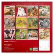 Poznámkový kalendář Mláďata 2022, 30 × 30 cm