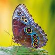 Poznámkový kalendář Motýli 2020, 30 × 30 cm