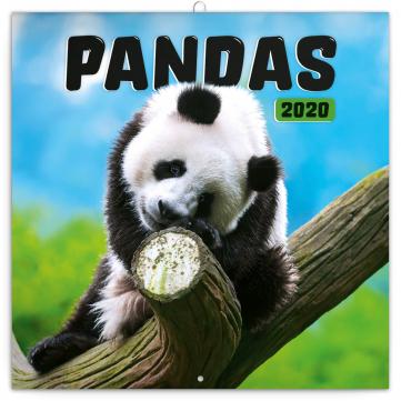 Poznámkový kalendář Pandy 2020, 30 × 30 cm