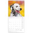 Poznámkový kalendář Psi 2019, 30 x 30 cm