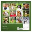 Poznámkový kalendář Psi 2020, 30 × 30 cm