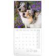Poznámkový kalendář Psi 2021, 30 × 30 cm