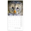 Poznámkový kalendář Sovy 2021, 30 × 30 cm