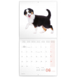 Grid calendar Puppies 2020, 30 × 30 cm