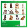 Poznámkový kalendář Štěňata 2021, 30 × 30 cm