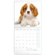 Poznámkový kalendář Štěňata 2022, 30 × 30 cm