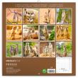Poznámkový kalendář Surikaty 2019, 30 x 30 cm