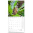 Poznámkový kalendář Surikaty 2020, 30 × 30 cm