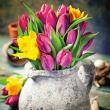Poznámkový kalendář Tulipány 2019, 30 x 30 cm