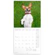 Poznámkový kalendář Úsměv, prosím 2019, 30 x 30 cm