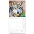 Poznámkový kalendář Vlci 2022, 30 × 30 cm