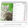 Stolní kalendář Kočky – se jmény koček 2019, 16,5 x 13 cm