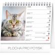 Desk calendar Cats – with cat names 2020, 16,5 × 13 cm