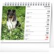 Stolní kalendář Psi – se jmény psů 2022, 16,5 × 13 cm