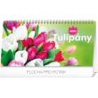 Stolní kalendář Tulipány riadkový SK 2020, 25 × 12,5 cm